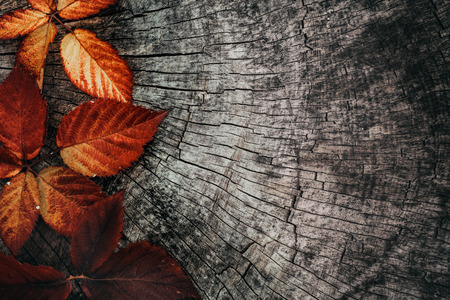 Photo pour Autumn leaves. Fall red leaves on tree bark. Nature background - image libre de droit