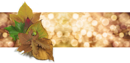 Foto de Autumn Leaf Bokeh Website Banner - Graphical wide bokeh orange and gold background header with a small group of autumn leaves on left side - Imagen libre de derechos