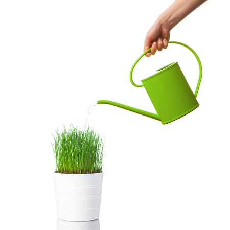 Photo for watering green grass with a watering can, isolated on white - Royalty Free Image