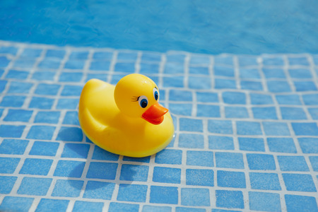 Foto de yellow rubber duck in blue swimming pool - Imagen libre de derechos