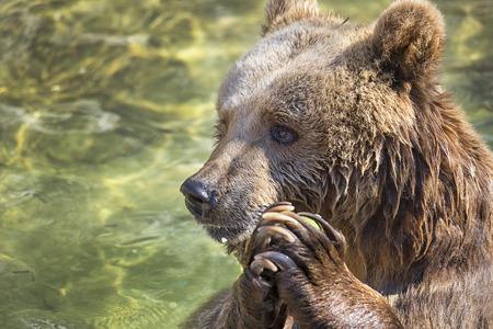 Photo for Praying bear - Royalty Free Image