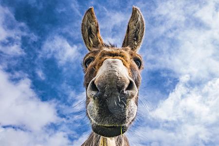 Photo pour Donkey face - image libre de droit