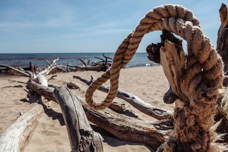 Photo pour Scrap of wire and dead trees on the Kolka cape beach. - image libre de droit