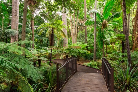 Photo for Path through the Fern Gully of the Royal Botanic Gardens in Melbourne. - Royalty Free Image