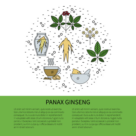 Illustration for Flyer in line style.Panax Ginseng line icons isolated on white background vector illustration. - Royalty Free Image