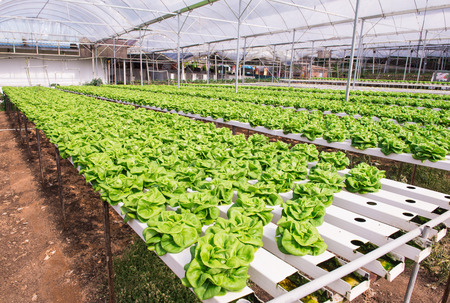 Hydroponic Gardening Systems in greenhouse at Cameron Highlands