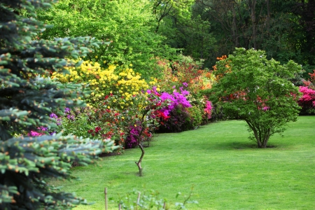 Colourful flowering shrubs in a spring garden in shades of yellow, pink and red bordering a neatly manicured lush green lawn with a backdrop of dense trees
