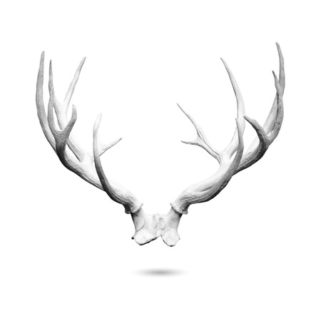 Photo pour Antler replicas, made of cement, isolated on white  - image libre de droit