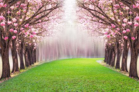 Photo for The romantic tunnel of pink flower tree, Pink trumpet tree. - Royalty Free Image