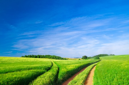 Photo pour Summer landscape. Green field, trees and blue sky - image libre de droit