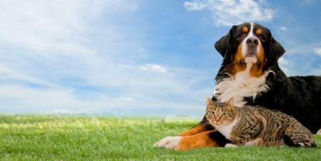 Dog and cat together on grass, sunny spring day and blue sky. Panorama version