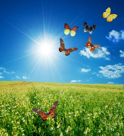 Photo pour Butterfly spring field. A group o colorful butterflies in the spring summer grass land - image libre de droit