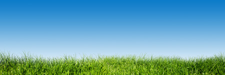 Photo for Green grass on blue clear sky, spring nature theme. Panorama or banner. Super high resolution, premium quality. - Royalty Free Image