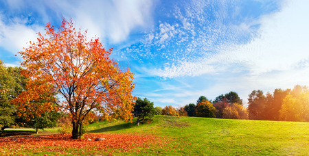 Foto de Autumn, fall landscape with a tree full of colorful, falling leaves, sunny blue sky. Wide perspective, panorama. Perfect seasonal theme. - Imagen libre de derechos