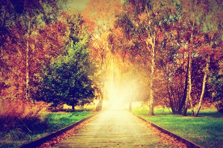 Photo pour Autumn, fall park. Wooden path towards the sun. Colorful leaves, romantic aura and concepts of new life, hope, way to heaven. - image libre de droit