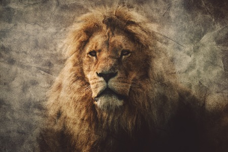 Photo for Majestic lion in a vintage portrait. King of the jungle. Dangerous animals and wildlife. - Royalty Free Image