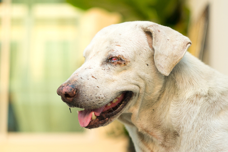 white stray dog with scars