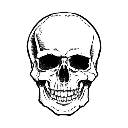 Illustration for Black and white human skull with a lower jaw. - Royalty Free Image
