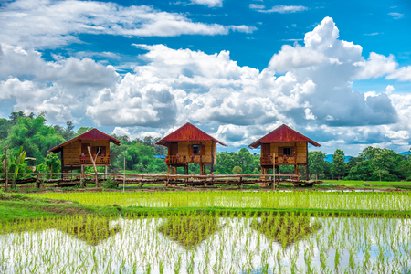 Photo pour Three farming huts and a view of rice field. An image of homestay at the rice field. Beautiful view of the rice paddy with the bright blue sky background in Nan, Thailand. - image libre de droit