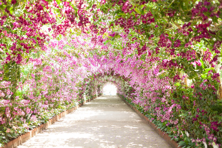Photo for footpath in a botanical garden with orchids lining the path. - Royalty Free Image