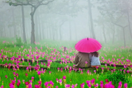 Photo for romantic scene of lover surround by pink siam tulip flower and fog - Royalty Free Image