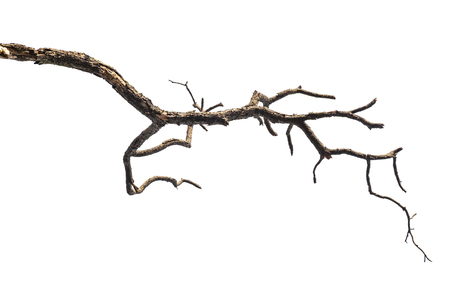 Photo for Tree branch isolated on white background - Royalty Free Image