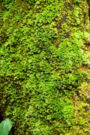 Photo for wood covered with moss. background - Royalty Free Image