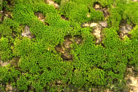 Photo for wood covered with moss.  - Royalty Free Image