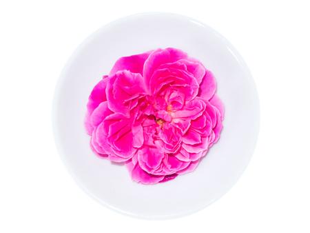 Photo for Damask rose petals for rose tea on white background. (Rosa damascena Mill) - Royalty Free Image