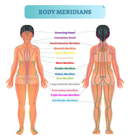 Ilustración de Body meridian system vector illustration scheme, Chinese energy acupuncture therapy diagram chart. Female body with energy paths and corresponding inner organs. - Imagen libre de derechos