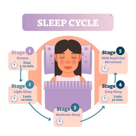 Ilustración de Healthy human sleep cycle vector illustration diagram with female in bed and sleep stages. Educational circle type infographic scheme with arrows. - Imagen libre de derechos