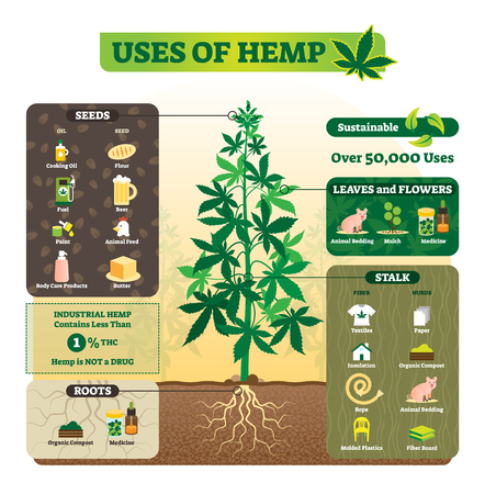 Illustration pour Uses of hemp vector illustration. Seeds, leaf, flower, root and stalk use for cooking oil, butter, fuel, bedding and others. Application of marijuana herb without THC. - image libre de droit