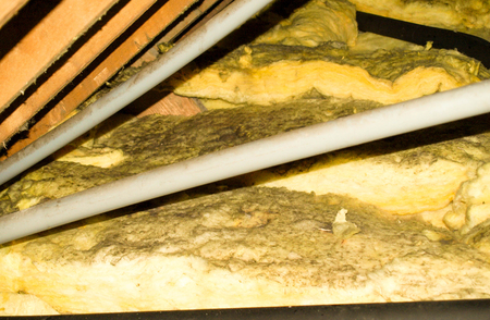 Photo for A typical household attic that is covered in mould spores. - Royalty Free Image
