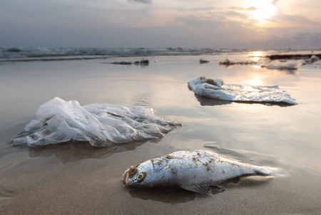 Foto de Death fish and plastic garbage on the beach in pollution sea scape  environment with sun lighting. - Imagen libre de derechos