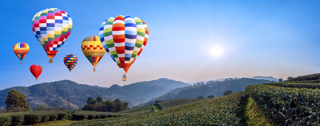 Photo for Panorama of  colorful hot air balloon fly over Landscape of tea farm with sun rise in the morning at Chiangrai, Thailand - Royalty Free Image