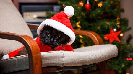 Photo for New Years photo of black cat in Santa costume - Royalty Free Image