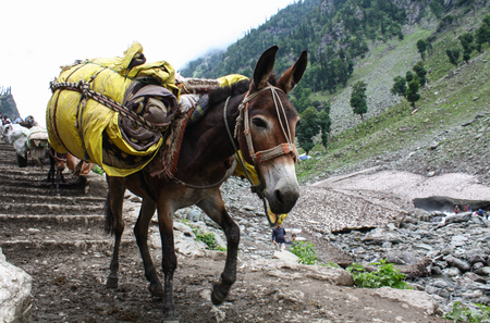 Foto de Donkey carrying heavy supplies and luggage on the mountain - Imagen libre de derechos