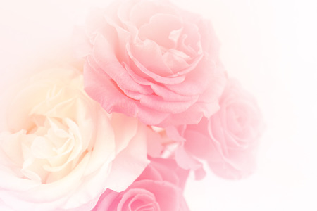 Photo pour light pink roses in soft color and blur style for background - image libre de droit