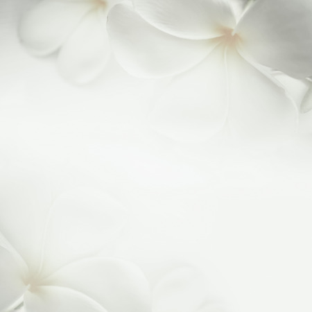 Photo for frangipani plumeria and sweet flowers in soft color and blur style for background - Royalty Free Image