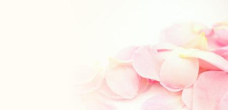 Photo pour sweet color petal rose for romantic background - image libre de droit