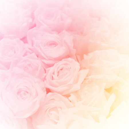 Photo for a group of rose, in soft style for background - Royalty Free Image