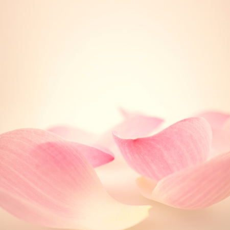 Photo pour sweet pink lotus in soft and blur style for background - image libre de droit
