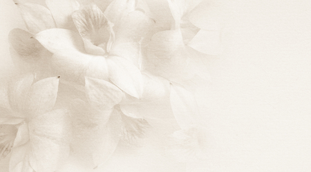 Foto de sweet orchids on mulberry paper texture for background - Imagen libre de derechos