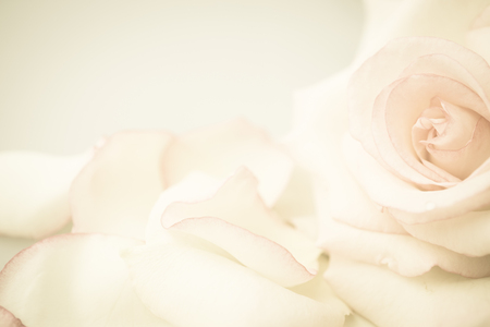 Foto de pink rose flower in vintage color style for romantic background - Imagen libre de derechos