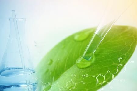 Foto de water drop from leaf and laboratory for natural chemistry concept - Imagen libre de derechos