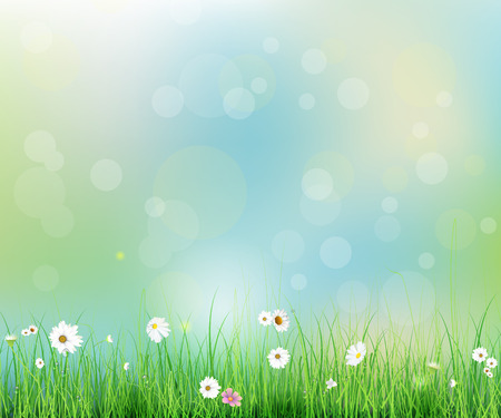 Illustration pour Vector illustration Spring nature field with green grass, white Gerbera- Daisy flowers at meadow and water drops dew on green leaves, with bokeh effect on blue-green pastel colorful background - image libre de droit