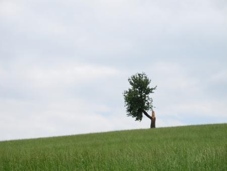 a single tree after lightning strike