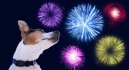 Photo pour Dog muzzle jack russell terrier against the sky with colored fireworks. Safety of pets during fireworks concept - image libre de droit