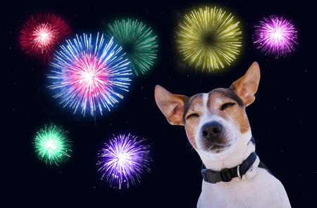 Photo for Dog muzzle closed eyes jack russell terrier against the sky with fireworks. Safety of pets during fireworks concept - Royalty Free Image