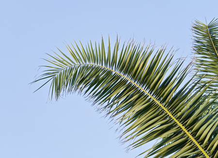 Photo for Palm leaf against blue sky with copy space Holy Week Easter concept Long weekend spring break - Royalty Free Image
